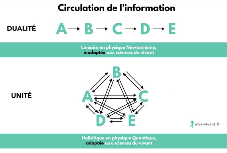 Différence de traitement de l'information